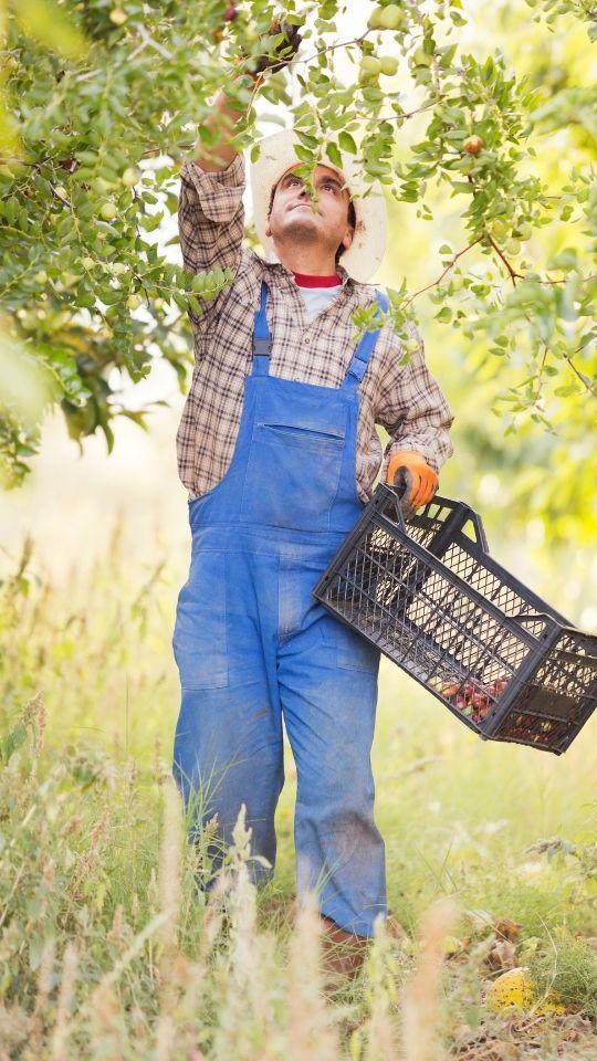 producteur local, producteurs locaux, partenaires, producteurs bio, agriculteur, agriculteurs, agriculteur bio, agriculture raisonnée, agriculture paysanne, exploitations, artisans, artisanale, producteur de bieres, apiculteur, maraicher, maraichers, horticulteur, torréfacteur, boulanger, fromager, vergers, éleveur de chèvres, éleveurs, fermes, gaec, amap, circuit court, circuits courts, paysans, production locale, La Ronde du Bio, magasin bio, Biocoop, coopérative bio, Bio monde, produits bio, produits locaux, producteurs locaux, vrac, produits vracs, zero déchet, Faverges, Annecy, Talloires, St Jorioz, Doussard, Lathuile, Giez, Montmin, Seythenex, Ugine, Albertville